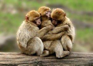 amistad_entre_animales_-_monos